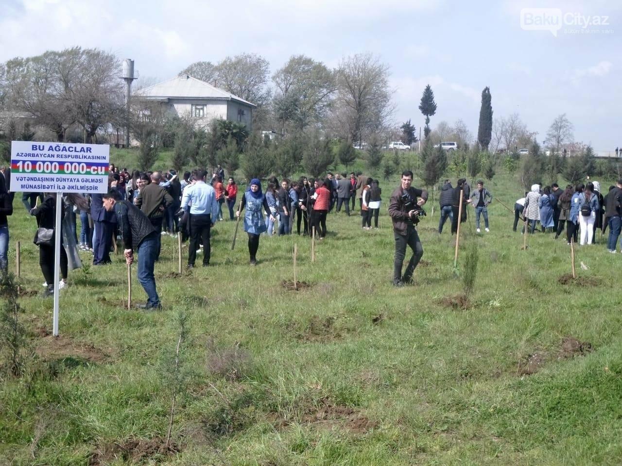 10 milyonuncu Bakı sakininin şərəfinə 25 minə yaxın ağac əkildi - FOTO, fotoşəkil-3