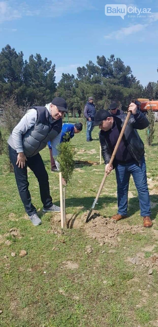 10 milyonuncu Bakı sakininin şərəfinə 25 minə yaxın ağac əkildi - FOTO, fotoşəkil-2