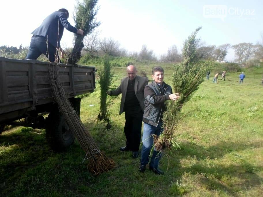 10 milyonuncu Bakı sakininin şərəfinə 25 minə yaxın ağac əkildi - FOTO, fotoşəkil-5