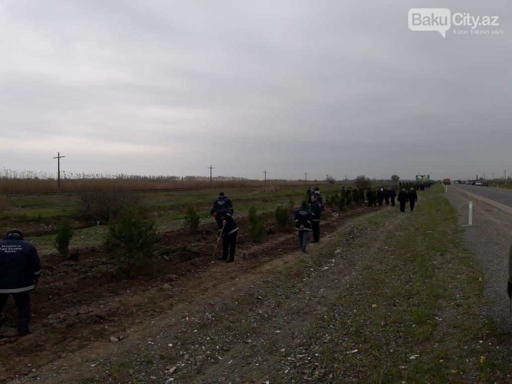 10 milyonuncu Bakı sakininin şərəfinə 25 minə yaxın ağac əkildi - FOTO, fotoşəkil-10