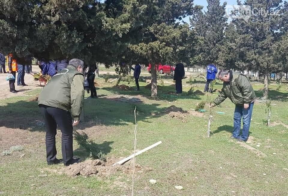 10 milyonuncu Bakı sakininin şərəfinə 25 minə yaxın ağac əkildi - FOTO, fotoşəkil-8
