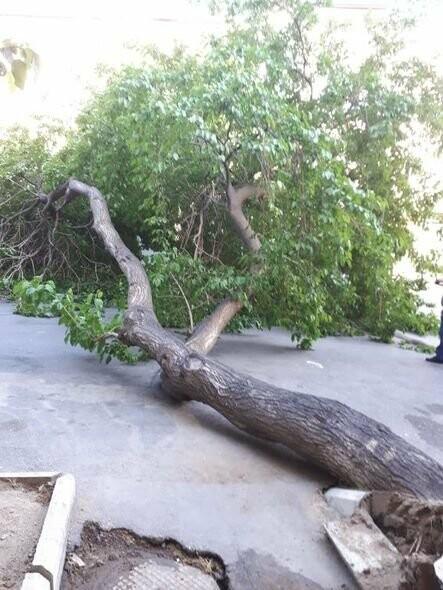 Güclü külək Bakıda ağacları aşırdı - FOTO, fotoşəkil-1