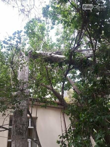 Güclü külək Bakıda ağacları aşırdı - FOTO, fotoşəkil-2