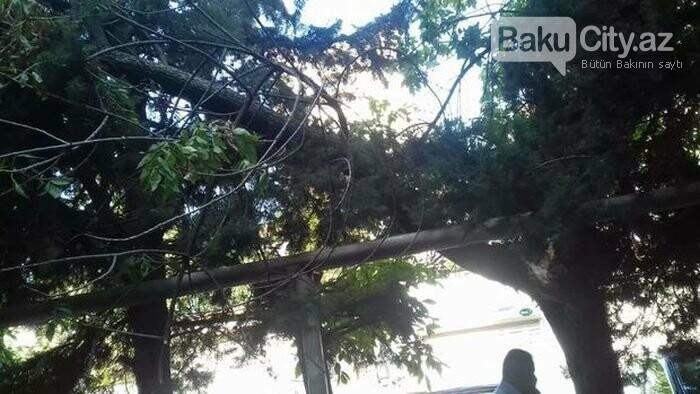 Bakıda güclü külək: ağaclar maşınların üstünə aşdı - FOTO, fotoşəkil-1