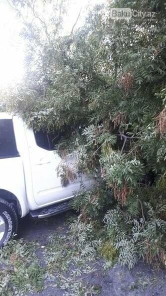 Bakıda güclü külək: ağaclar maşınların üstünə aşdı - FOTO, fotoşəkil-2