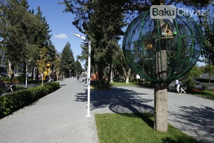 Bakının yenilənən Atatürk prospekti: Mərkəzdə istirahət üçün ideal məkan - FOTOREPORTAJ, fotoşəkil-10