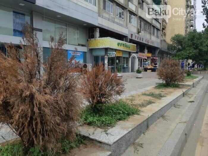 """Bakıda yaradılan """"Yaşıl guşələr"""": Biganə qalanlar da var - FOTO, fotoşəkil-4"""