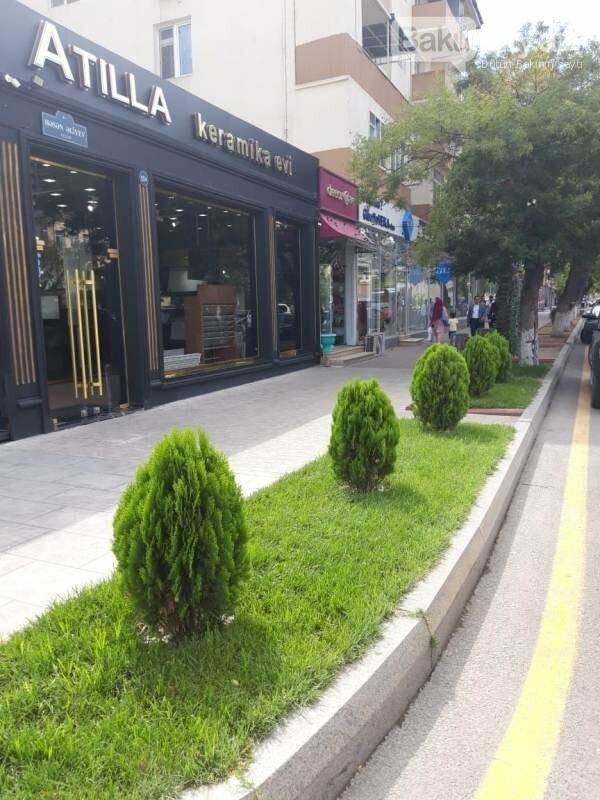 """Bakıda yaradılan """"Yaşıl guşələr"""": Biganə qalanlar da var - FOTO, fotoşəkil-5"""