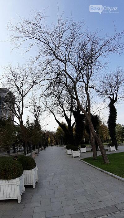 Dədə Qorqud parkı: şəhərin mərkəzində oazis, katamaranla gəzinti - FOTO, fotoşəkil-10