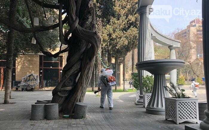 Bakı parklarında dezinfeksiya işləri aparılır - FOTO / VİDEO, fotoşəkil-5