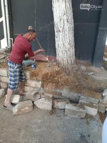 BŞİH-dən dibi betonlanmış ağaclarla bağlı AÇIQLAMA - FOTO, fotoşəkil-5