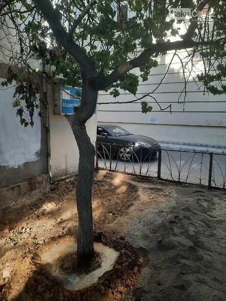 BŞİH-dən dibi betonlanmış ağaclarla bağlı AÇIQLAMA - FOTO, fotoşəkil-2