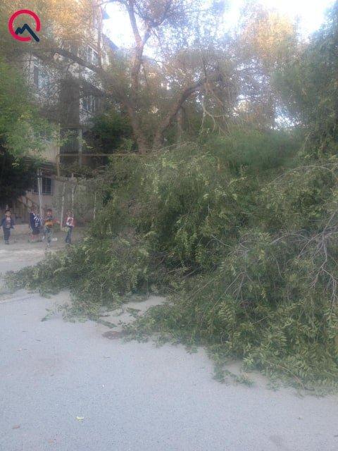 Bakıda ağac avtomobilin üzərinə aşdı - FOTO, fotoşəkil-2