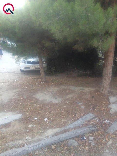 Bakıda ağac avtomobilin üzərinə aşdı - FOTO, fotoşəkil-4