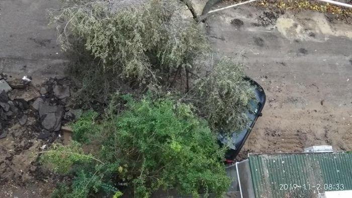 Bakıda külək ağacları aşırdı, avtomobil altında qaldı - FOTO, fotoşəkil-1