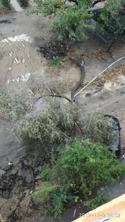 Bakıda külək ağacları aşırdı, avtomobil altında qaldı - FOTO, fotoşəkil-2