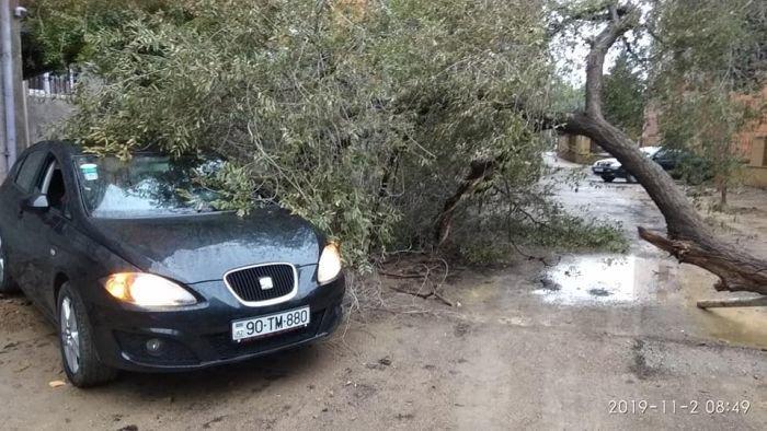 Bakıda külək ağacları aşırdı, avtomobil altında qaldı - FOTO, fotoşəkil-4