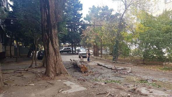 Bakıda güclü külək ağacları maşınların üstünə aşırdı - FOTO, fotoşəkil-9