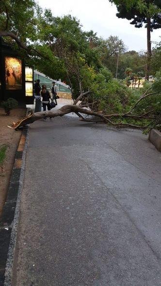 Bakıda güclü külək ağacları maşınların üstünə aşırdı - FOTO, fotoşəkil-8