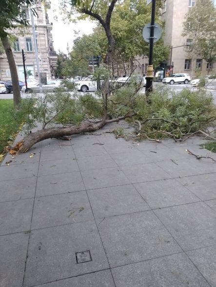 Bakıda güclü külək ağacları maşınların üstünə aşırdı - FOTO, fotoşəkil-10