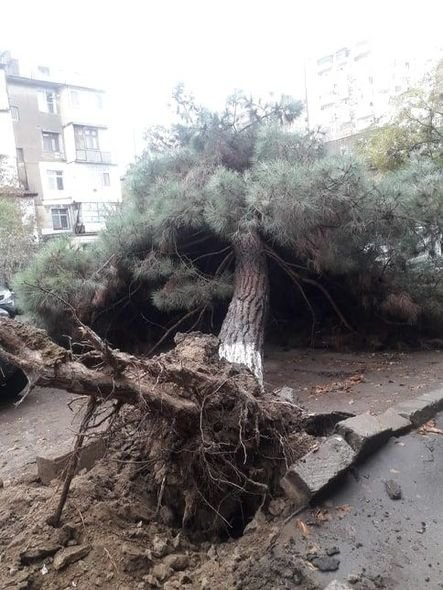 Bakıda güclü külək ağacları maşınların üstünə aşırdı - FOTO, fotoşəkil-1