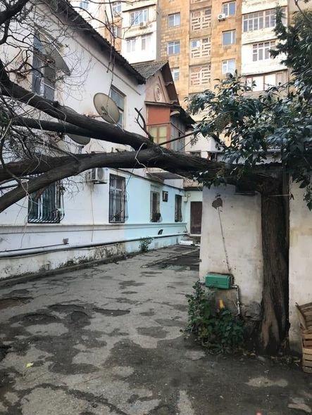 Bakıda güclü külək ağacları maşınların üstünə aşırdı - FOTO, fotoşəkil-2