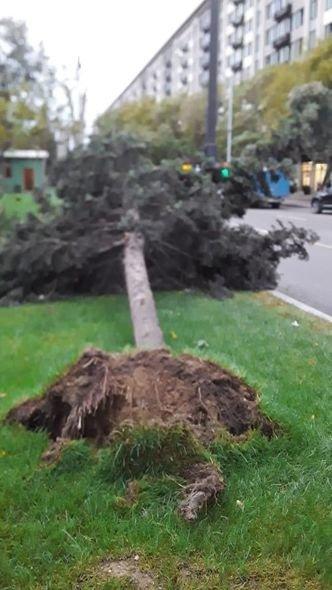 Bakıda güclü külək ağacları maşınların üstünə aşırdı - FOTO, fotoşəkil-3