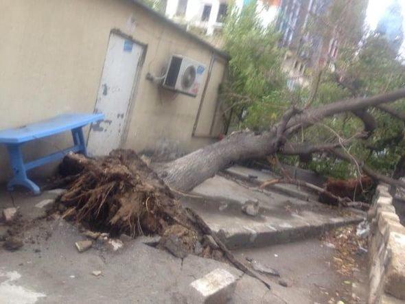 Bakıda güclü külək ağacları maşınların üstünə aşırdı - FOTO, fotoşəkil-4