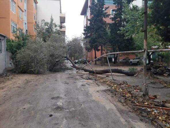 Bakıda güclü külək ağacları maşınların üstünə aşırdı - FOTO, fotoşəkil-5