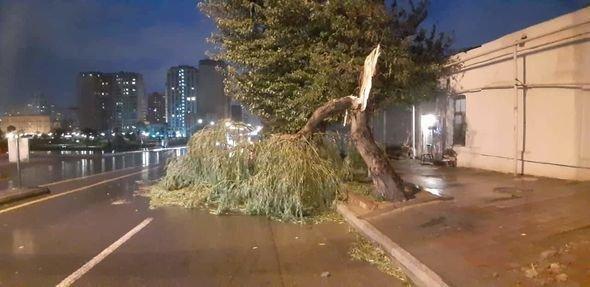 Bakıda güclü külək ağacları maşınların üstünə aşırdı - FOTO, fotoşəkil-7