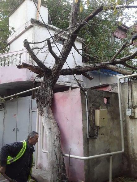 Bakıda güclü külək ağacları maşınların üstünə aşırdı - FOTO, fotoşəkil-11