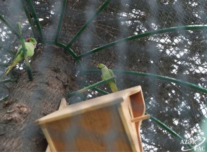 Bakının bu parkına tutuquşular buraxıldı - FOTO, fotoşəkil-1