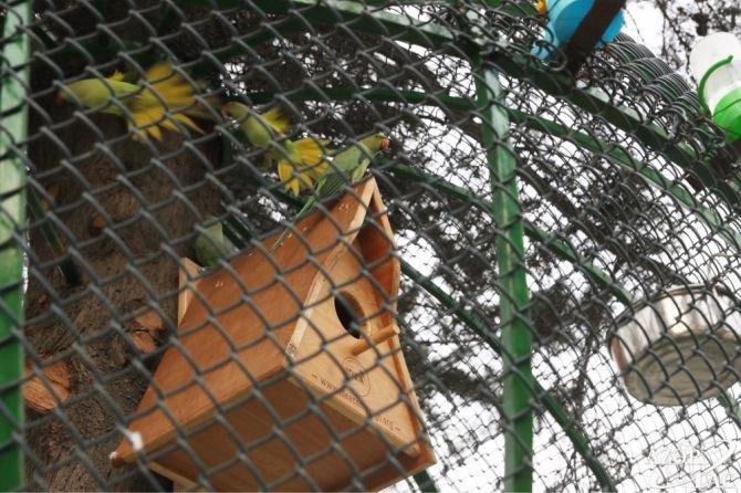 Bakının bu parkına tutuquşular buraxıldı - FOTO, fotoşəkil-2