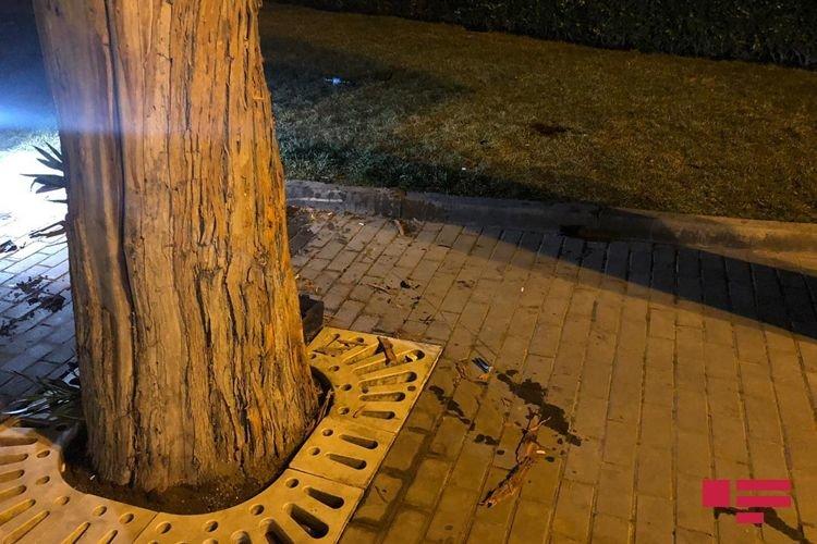 Bakıda idarə etdiyi motosikleti ağaca çırpan yol polisi öldü - FOTO + VİDEO, fotoşəkil-2