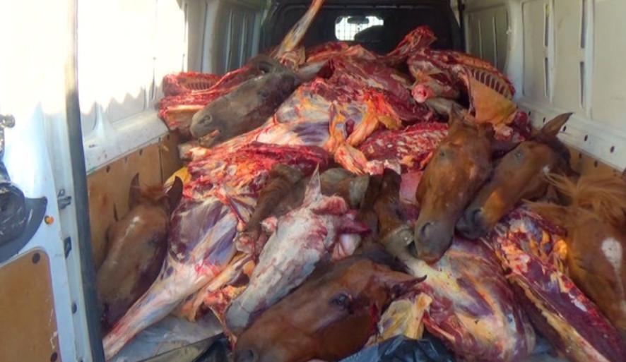 Bakıdakı iaşə obyektlərinə ölü at əti satanlar tutuldu - FOTO / VİDEO, fotoşəkil-2